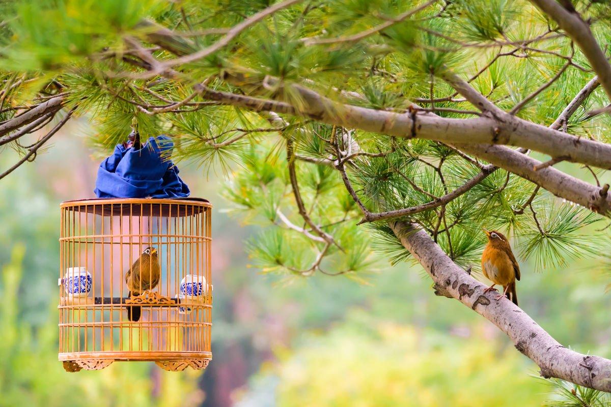 观赏鸟上火是怎么回事?